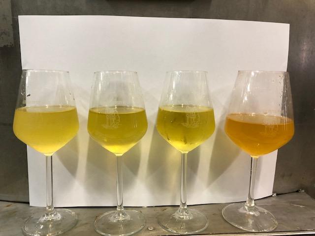 Maremma Toscana: vino Morellino di Scansano. Azienda Agricola Provveditore: famiglia Bargagli, produttori di vino da quattro generazioni. Produciamo vini eccellenti, di grande struttura, potente, autentico e sincero.